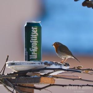 Natur pur. Vogelhochzeit in Roitzsch bei der Roten Rübe. - Peter
